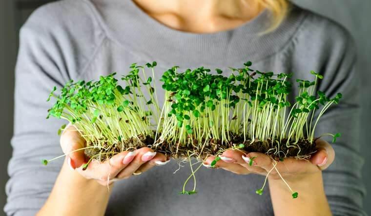 Microgreen Bertanam Praktis Untuk Anak Kos: The Week